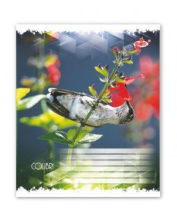 Зошит 12 арк., лінійка Brisk «Маленькі птахи»